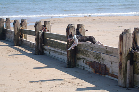 Jumping the groynes at Alnmouth Beach